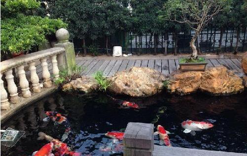 假山鱼池设计